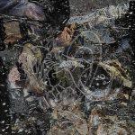 Premiere: Wulffluw XCIV & Nahshi – Latente (Syn Remix) [Ashida Park]
